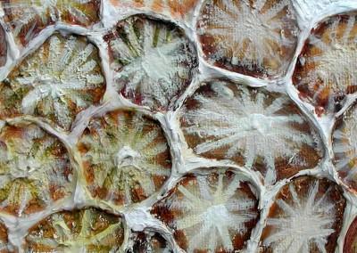"""Coral,  אקריליק ומשחת עיצוב על קנווס, 120x100 ס""""מ, 2003"""